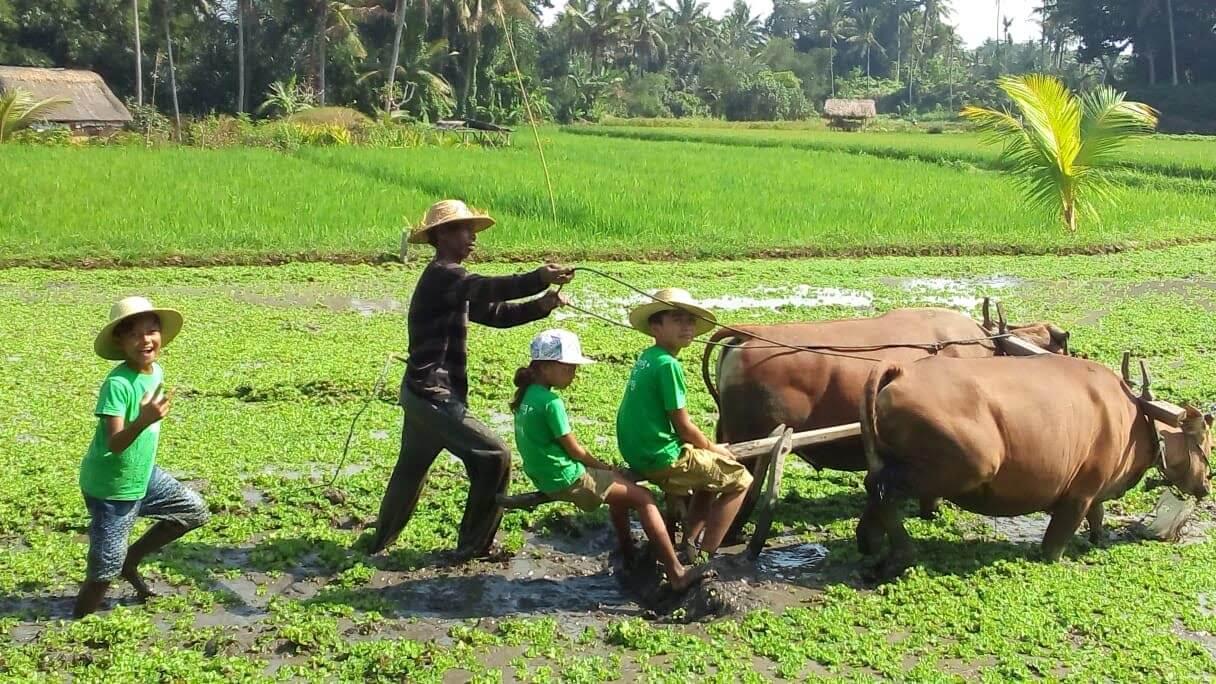 La Vie a la ferme ecotouristique à Bali en Famille