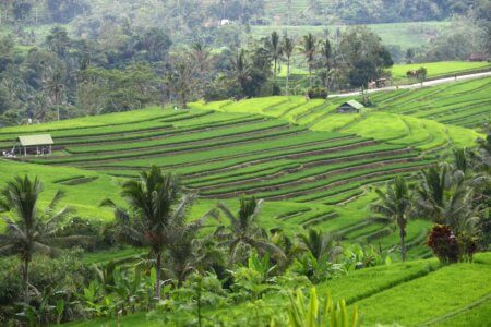 https://archipel360.com/wp-content/uploads/2018/12/archipel360-Bali-Riziere-6.jpg