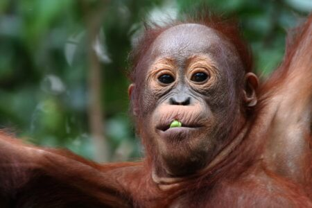 https://archipel360.com/wp-content/uploads/2018/12/archipel360-Borneo-Tanjung-91.jpg