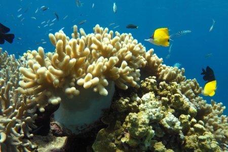 Fond marin du parc de Komodo à Flores