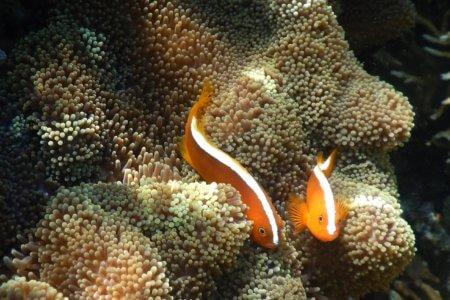 Indonésie Gili Snorkling