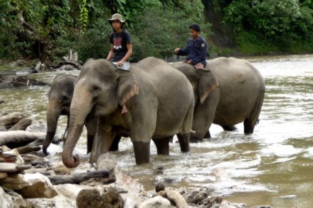 https://archipel360.com/wp-content/uploads/2018/12/archipel360-sumatra-tangkahan-19.jpg