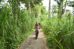Ballade a vélo au milieu des cannelles