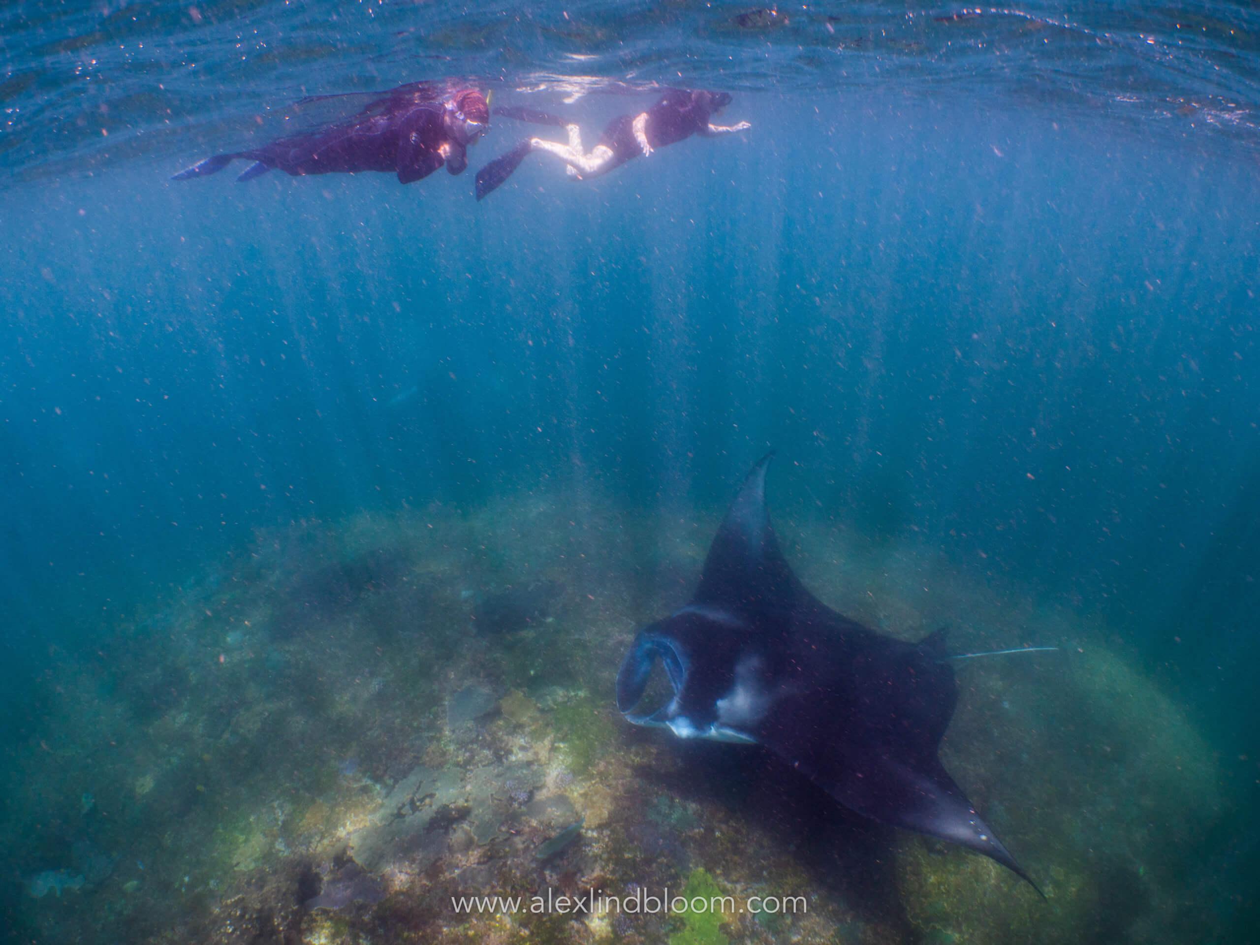 Récifs coralliens et Raie Manta