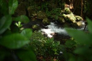 Ruisseau au coeur de la jungle