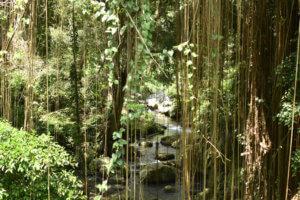 Ruisseau au milieu de la végétation