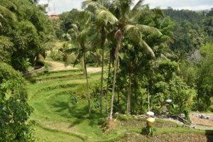 Jardin du temple Gunung Kawi à Bali