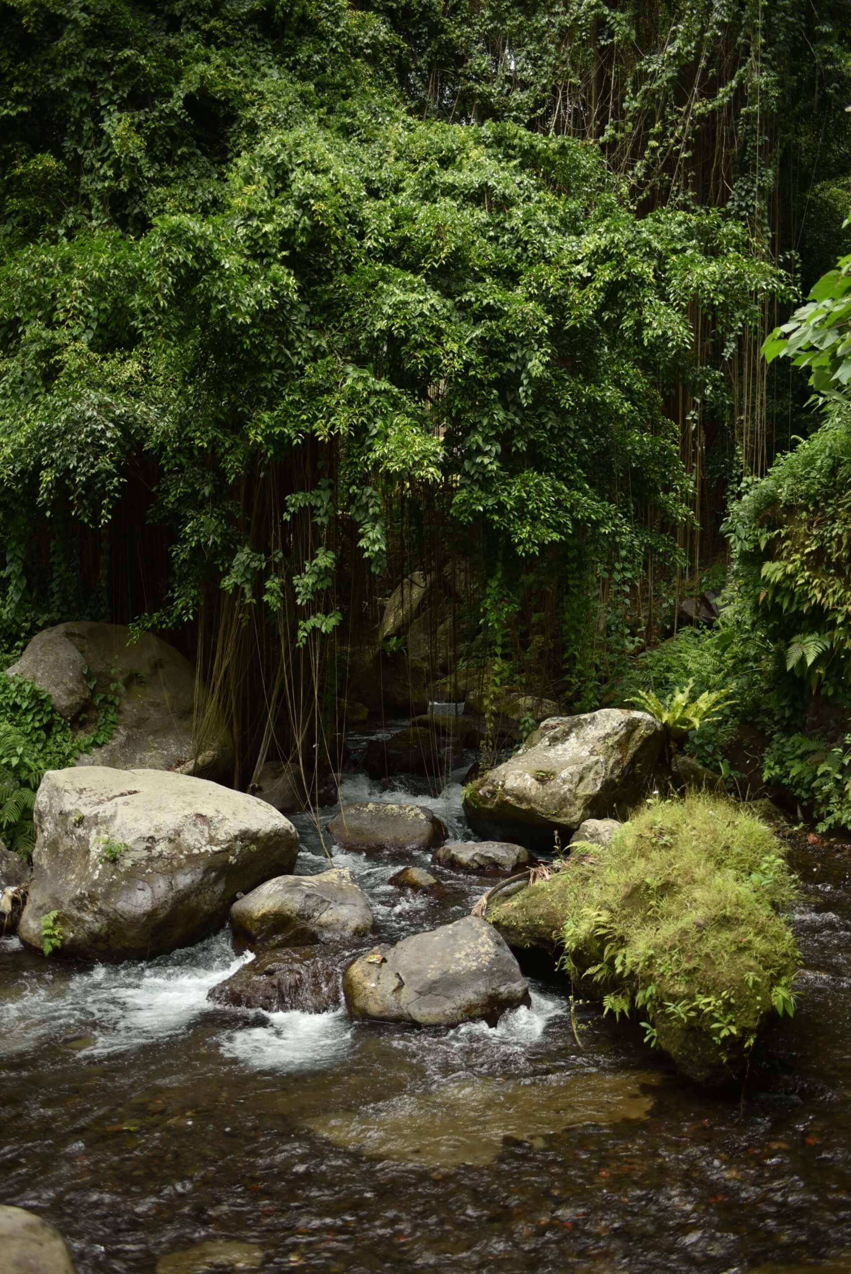 Ruisseau au milieu de la foret