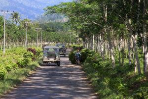 Sur la route de Sukamade