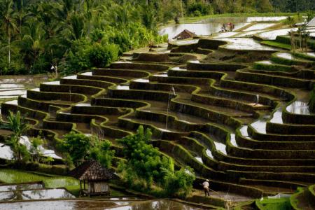 https://archipel360.com/wp-content/uploads/2019/01/archipel360-Bali-Belimbing-1-.png