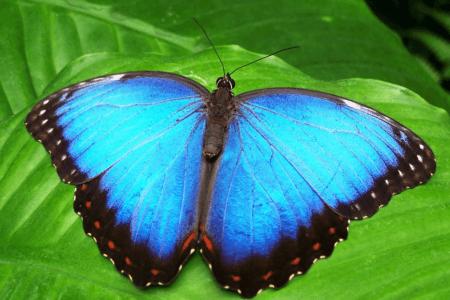 Les papillons de Bali