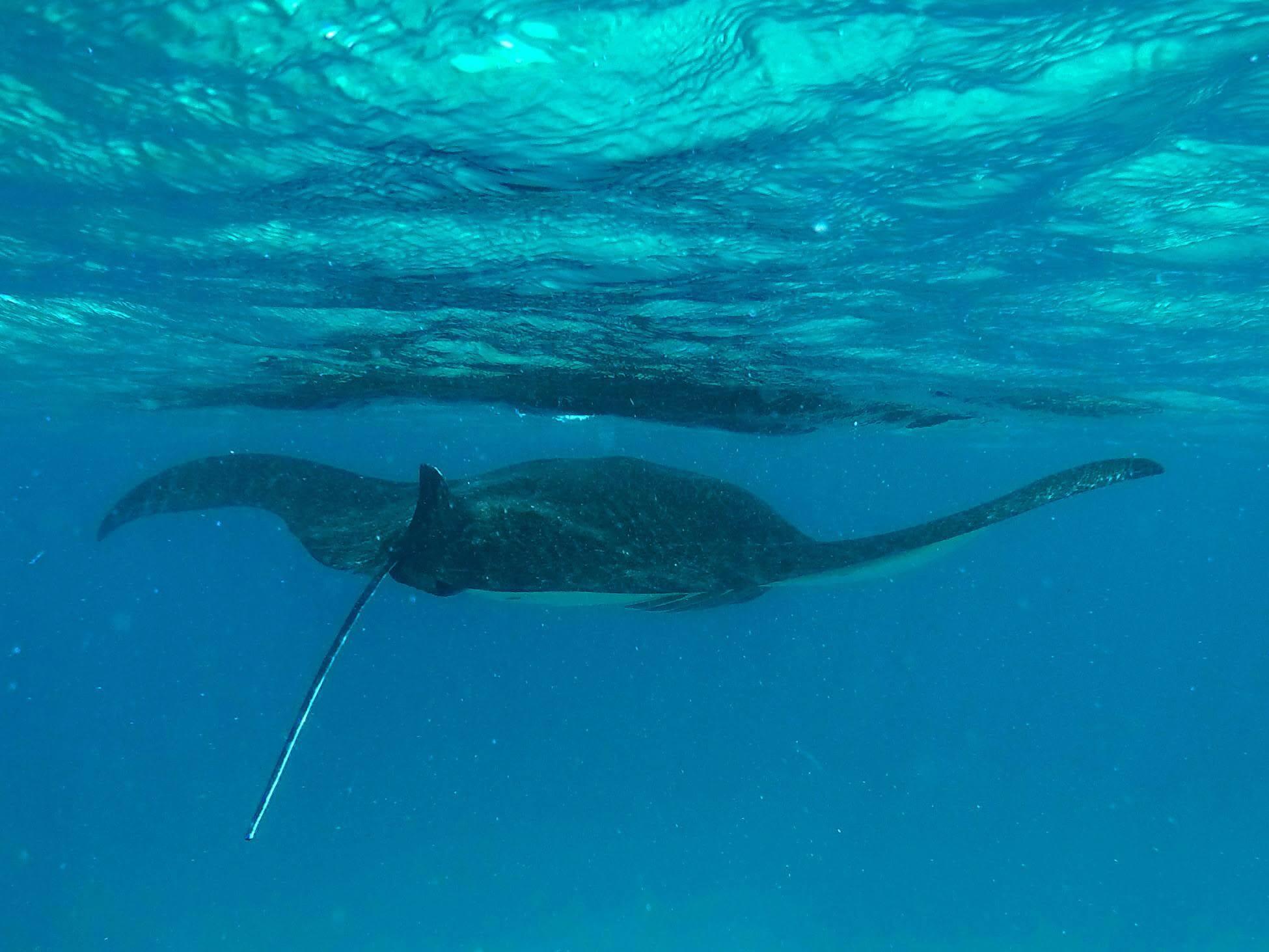 Découverte des animaux marins à Bali