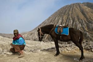 Ascension du mont Bromo à Cheval