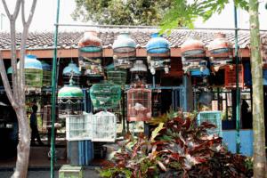 Marché aux oiseaux Ngasem à Yogyakarta
