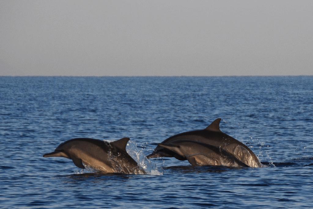 Les dauphins de Lovina à Bali
