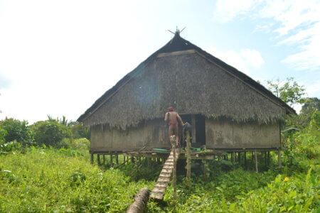 Ile de Siberut Uma (Maison Traditionnelle Mentawai)