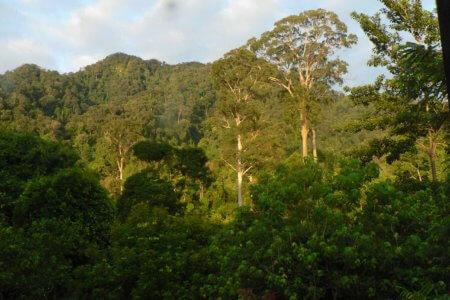 Foret tropicale de Tangkahan nord Sumatra en Indonesie