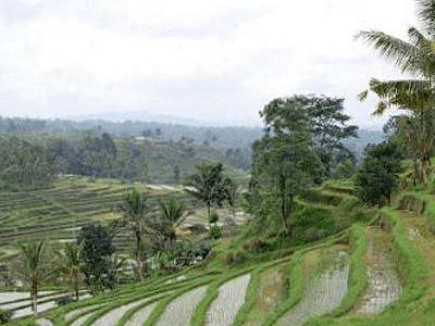 Riziere de l'ile de Bali en Indonesie