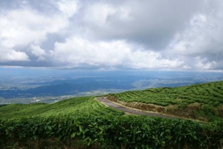Plantation de thé de Pagar Alam au sud de Sumatra en Indonésie