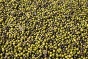 Plantation de poivre de Sihepeng au nord de