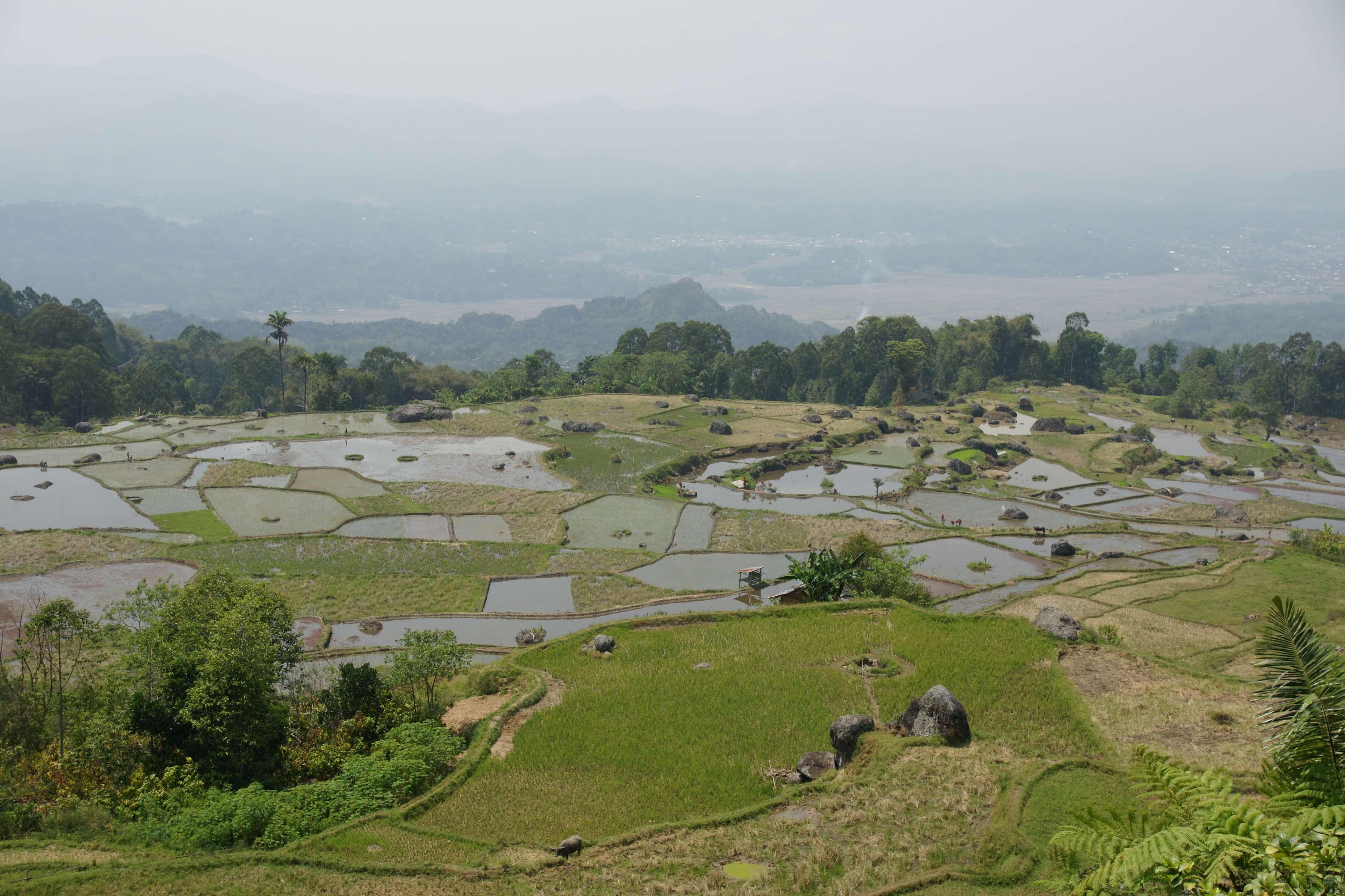 Rizieres trekking Toraja en Sulawesi