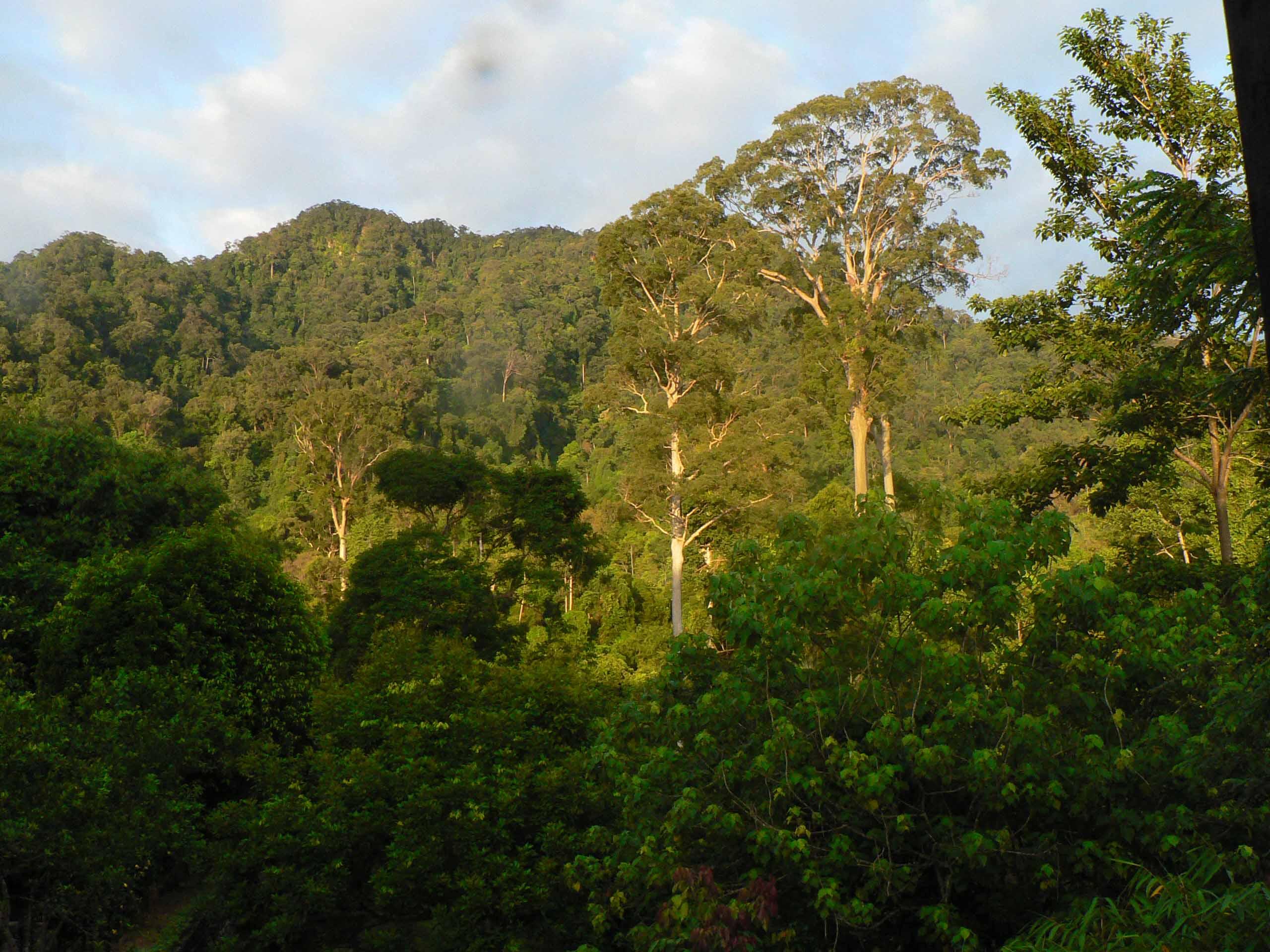 Jungle de Sumatra Tangkahan