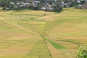 Les rizières en étoile de Cara à Flores