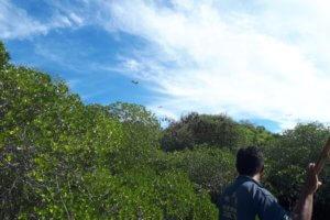 Mangrove à Riung Flores