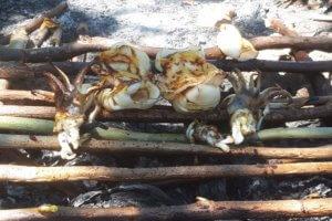 Pêche aux Calamars à Flores