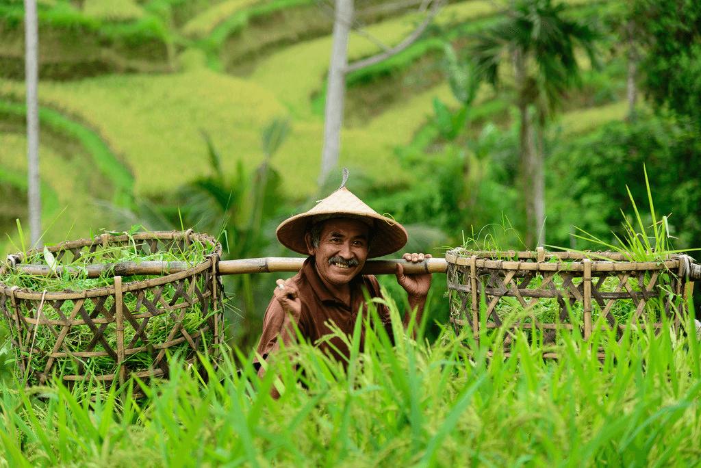 Paysan dans les rizières à Bali