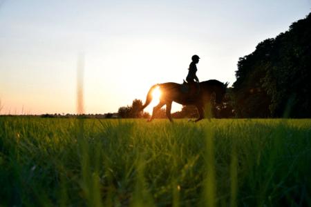 Cheval ubud à Bali