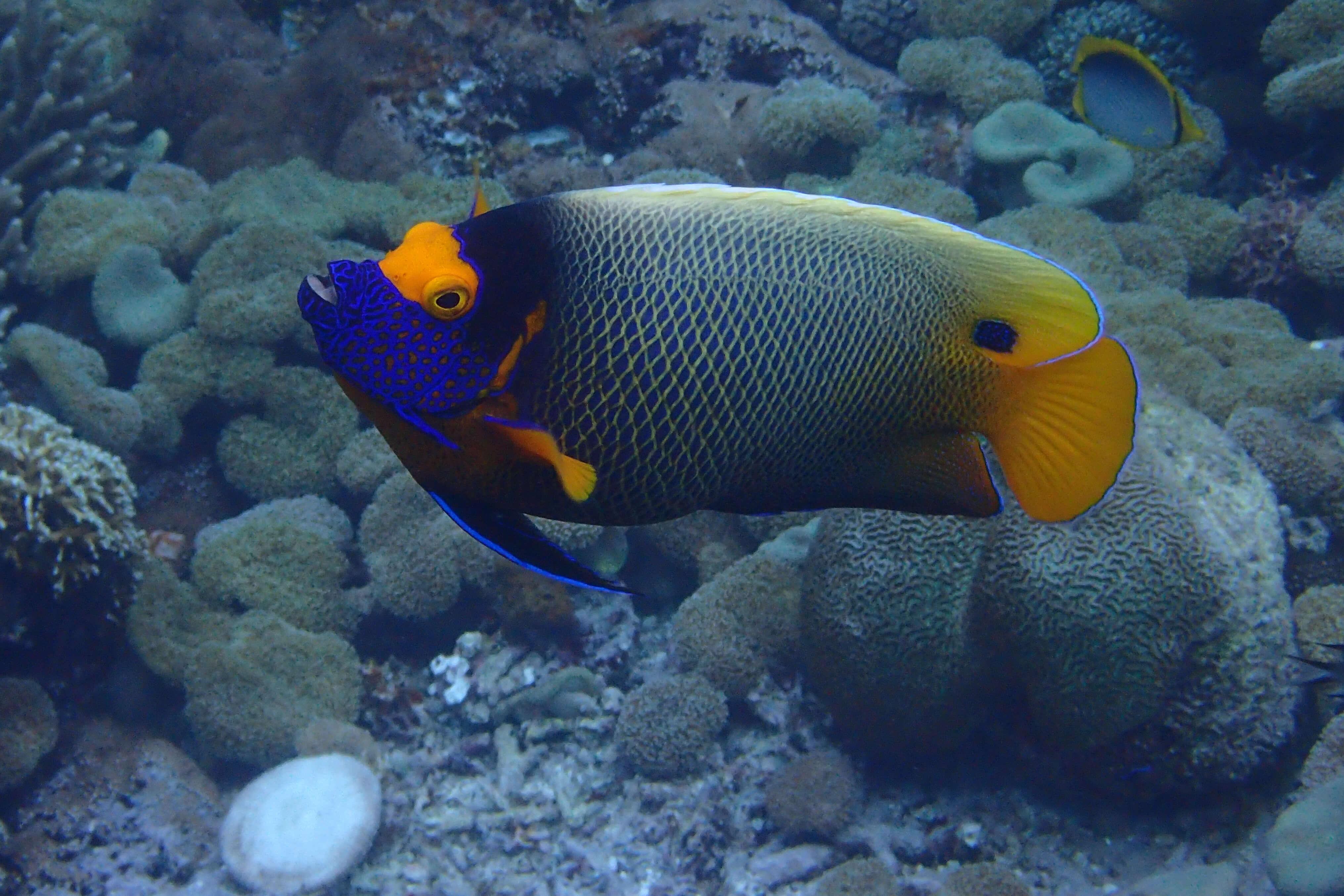 Poisson multicolore à Bali