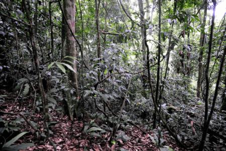 jungle du parc leuser a sumatra en Indonesie