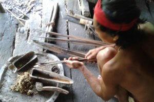 Fabrication du Curare chez les Mentawai à Sumatra
