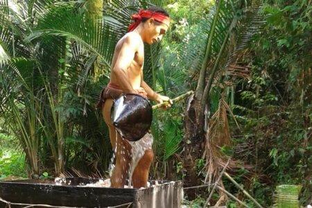 Fabrication du sagou Siberut Mentawai à Sumatra