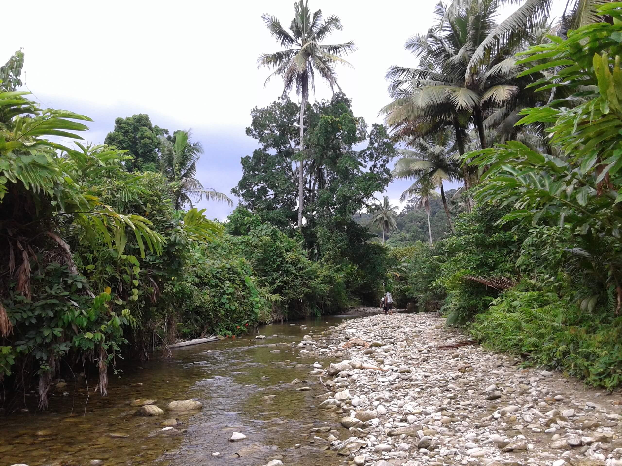 Rivière au milieu de la jungle à Sumatra Siberut Mentawai
