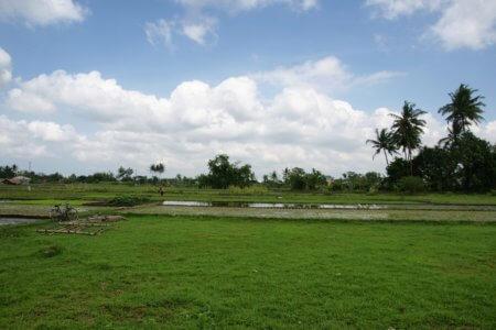 paysage de la campagne javanaise