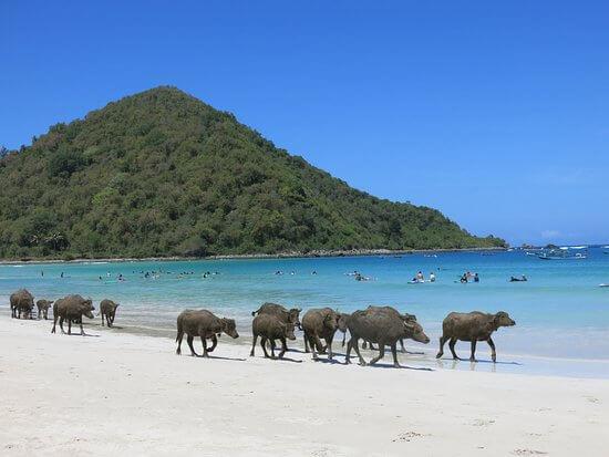 La plage de Selong Belanak, Lombok