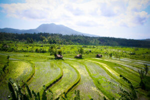 Rizières de Sidemen, Bali