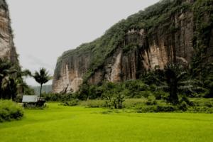 rizières au milieu d'énorme falaises
