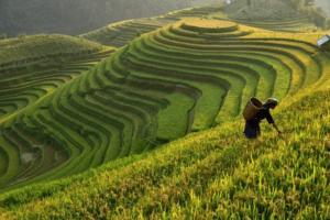 Les magnifiques rizières de Belimbing à Bali