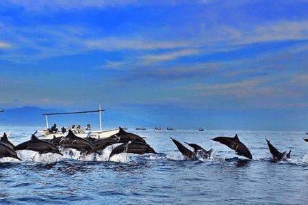 Les dauphins de Lovina au nord de Bali
