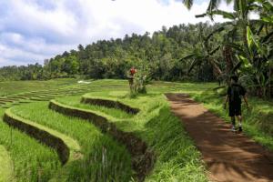 Ballade au bord des rizieres de Munduk à Bali