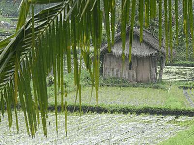 Cabanon au milieu des rizières