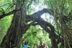 Expérience dans la foret pluviale de Bali