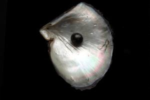 Ferme perlière a Pemuteran